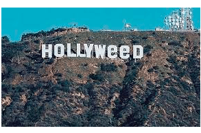 Head of Government Affairs – Cannabis Industry IGS Solutions LLC Los Angeles, CA
