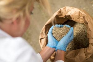 Hemp Crop Destruction and Legalization Analyzed in Recent Report