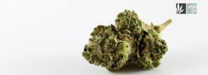 North Carolina Senate Committee Approves Bill to Legalize Medical Marijuana