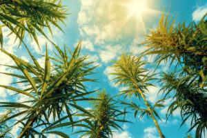 Rhode Island Medical Cannabis Lottery Delayed