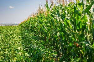 What If We Added Hemp into 5% of Existing Crop Rotation?