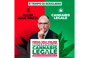 CNN: Italy will likely hold a referendum on decriminalizing cannabis next year