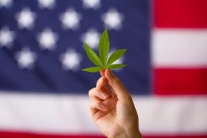 DEA Seeks to Increase Quota of Cannabis and Psilocybin for Research Purposes