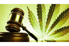 Everything You Need to Know About Cannabis Regulation in the US