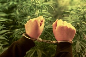 Felons Can Now Get Cannabis Licenses in Washington State