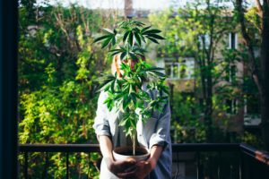 Florida Advocacy Petition Drive Aims to Allow Home Growing of Cannabis