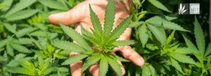 New Missouri Marijuana Reform Group Files Marijuana Legalization Ballot Initiative for 2022