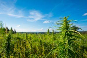 New York Prison Being Transformed Into $150 Million Cannabis Campus