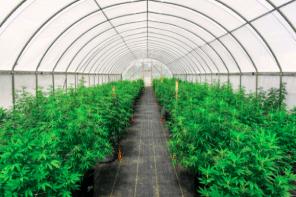 4 Hemp Farming Tips to Help Increase Your Profits