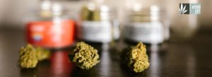 Connecticut Patients Can Now Legally Grow Medical Marijuana at Home