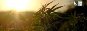 House Passes Defense Bill with Marijuana Banking Protections