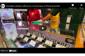 Las Vegas: Cannabis industry reflects on a record year of financial growth