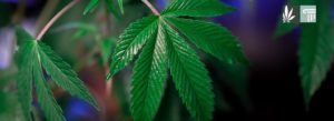 Oklahoma Activists File Recreational and Medical Marijuana Reform Initiatives for 2022 Ballot