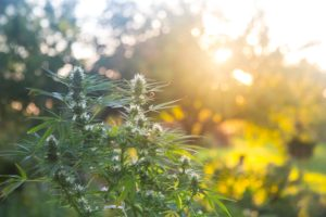 Oregon County Declares State of Emergency Due to Illegal Grows