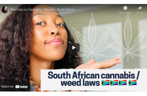 The Law on Cannabis / Weed in South Africa